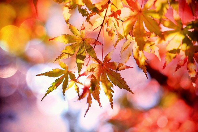 Das Beste aus zwei Welten: Ayurveda und TCM im Herbst.