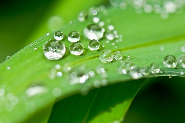 Splash! Wasser: Quell des Lebens.